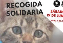 La SPAB organitza una nova recollida solidària per a ajudar amb l'alimentació felina i cerca nous voluntaris