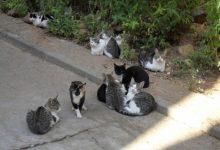 La SPAB de Burjassot organitza una nova recollida solidària davant la necessitat d'aliments per a gats