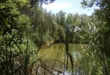 L'Ajuntament de València ha efectuat la neteja del llac del Parc de Marxalenes i les fonts del Parc Central