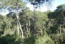 Torrent tindrà una brigada permanent per al manteniment de les zones forestals