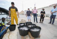 Ayuntamiento de Gandia y Cofradía de pescadores del Grau reeditan el acuerdo para recoger las medusas en temporada estival