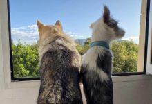 El Ayuntamiento lanza la campaña 'En Llíria censamos a nuestras mascotas'