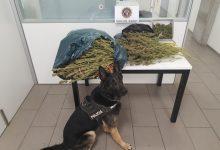 Nou decomís de drogues de la Unitat Canina de la Policia Local de Burjassot