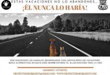 L'Ajuntament de Burjassot i la SPAB s'uneixen contra l'abandó estacional dels animals
