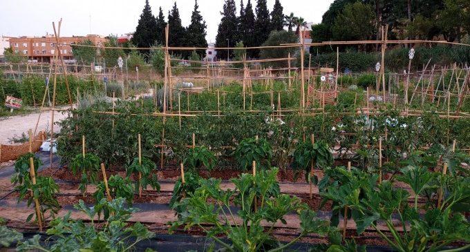 La tradició agrícola retorna a la ciutat de València de la mà dels horts urbans