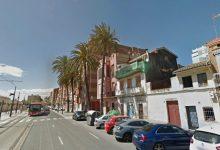 València protege las palmeras monumentales del Cabanyal-Canyamelar