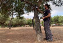 Paterna instal·la 20 nous paranys per al projecte pilot de reducció de mosquit tigre