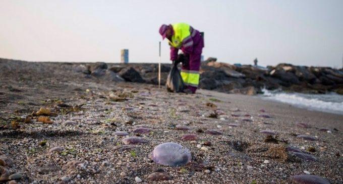 Tres de cada cuatro atenciones sanitarias por picaduras de insectos, garrapatas o medusas se producen en verano