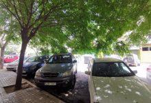 Giner (Cs) pide inspeccionar el estado del arbolado para evitar caídas de ramas y molestias en edificios