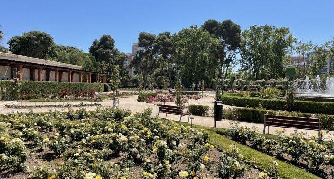 València nomenarà el roserar de vivers en honor a Pedro J. Salvador Palomo