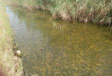La millora de la qualitat de l'aigua dels canals de l'Albufera al Palmar permet un creixement explosiu de vegetació subaquàtica
