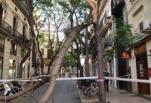 El Servici de Jardineria ha realitzat en agost més de mil intervencions en l'arbratge de València