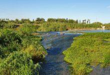 Sueca pone en valor la zona del azud del río retirando todo el cañizo invasor