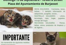 La Protectora d'Animals de Burjassot torna a buscar la solidaritat ciutadana amb un nou esdeveniment a la Plaça de l'Ajuntament